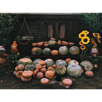 pumpkin for Halloween decorations