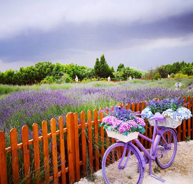 Beautiful Gardens in Cyprus