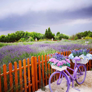 Check out Cyherbia lavender garden