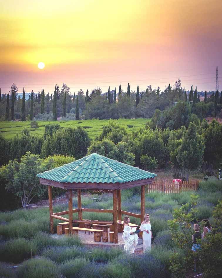 Beautiful Gardens In Cyprus at Cyherbia